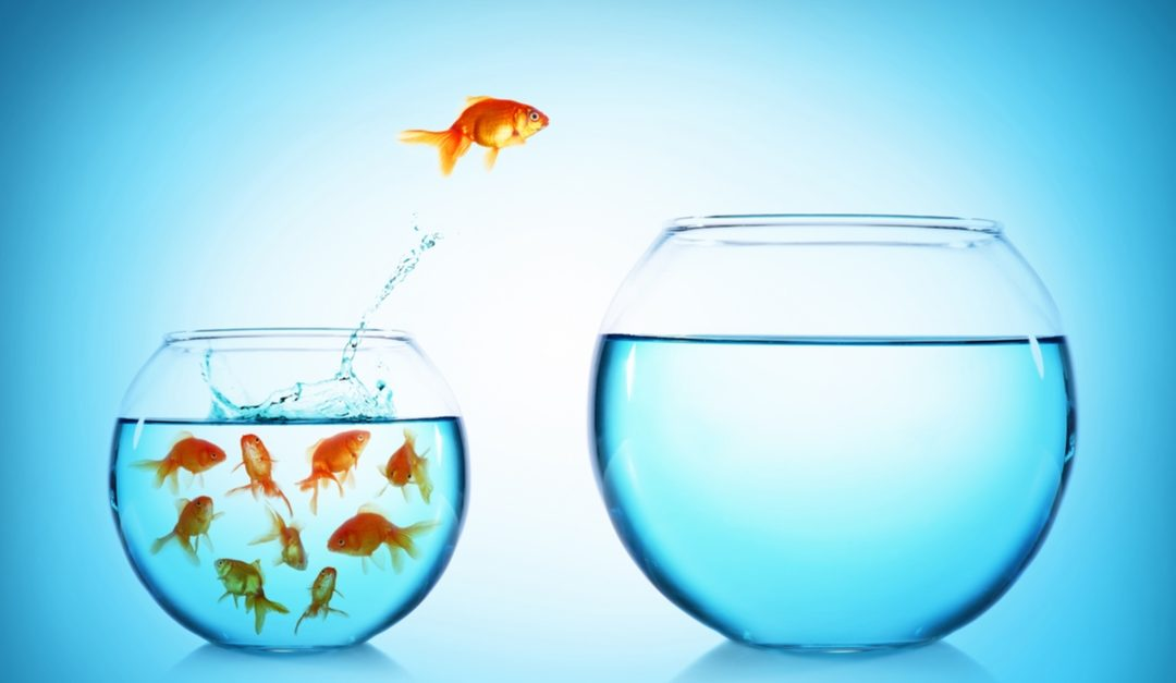Are you a Shark or a Goldfish in your career?